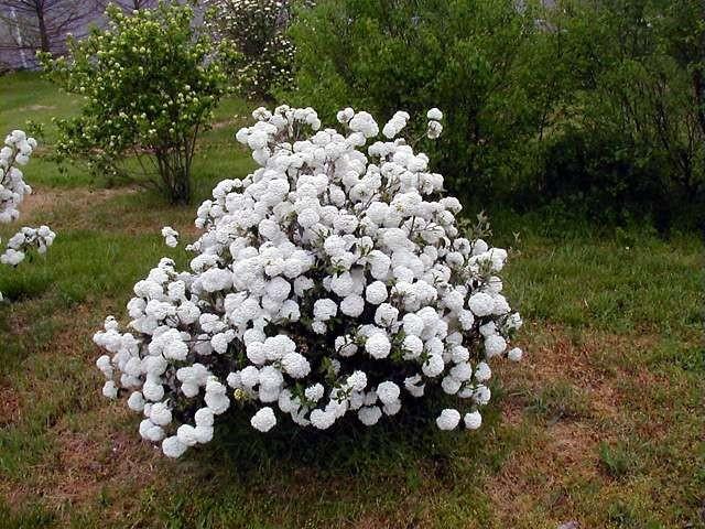Re: Уличные растения цветут!