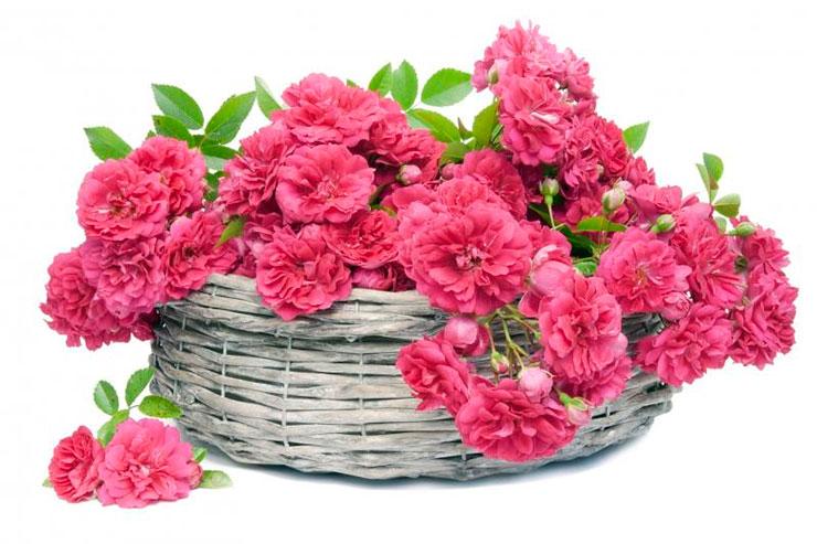 Купить цветы в питомниках подмосковья цветы с доставкой в питкяранте